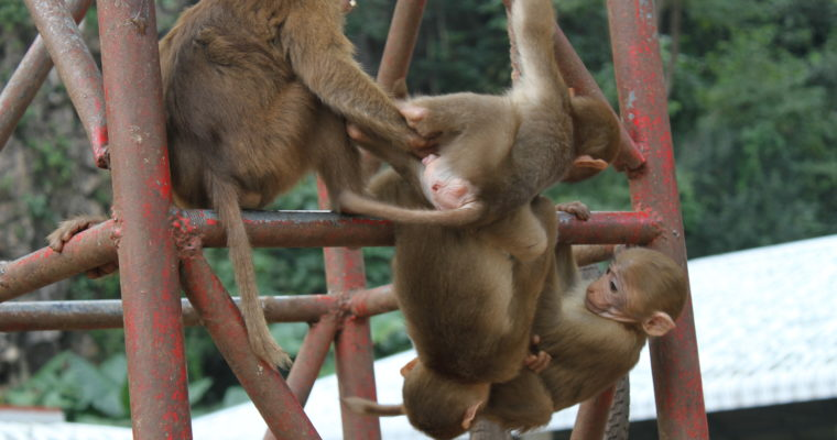 Cambodia and Thailand - Us vs. Monkeys of the World