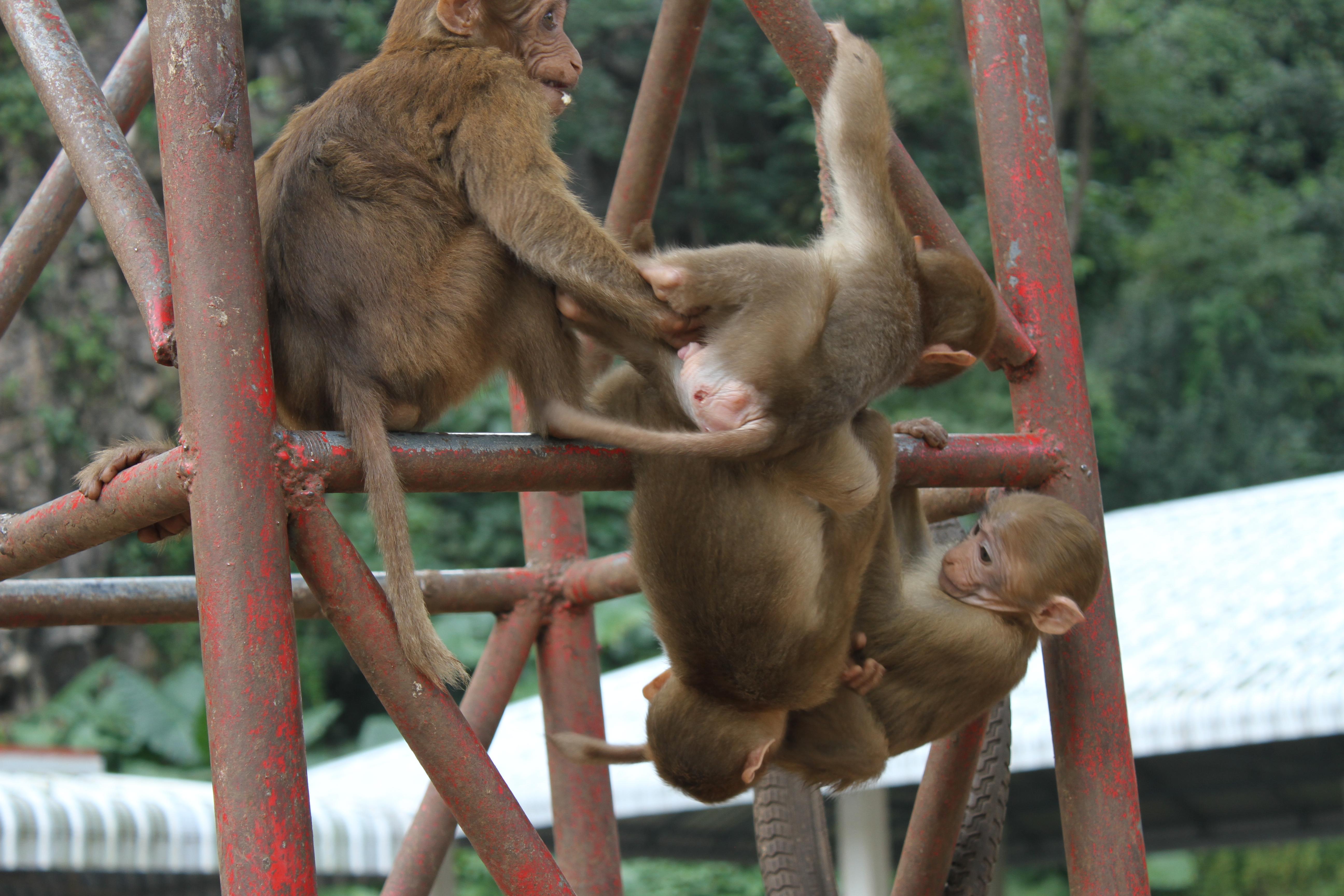 Cambodia and Thailand – Us vs. Monkeys of the World