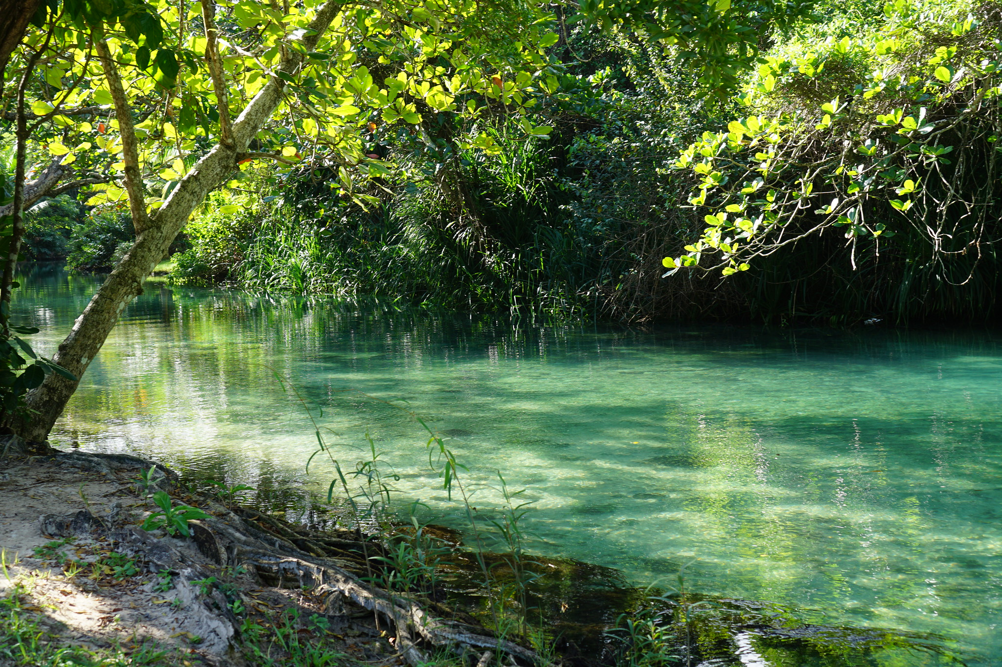 Jamaica: The Wild Northeast